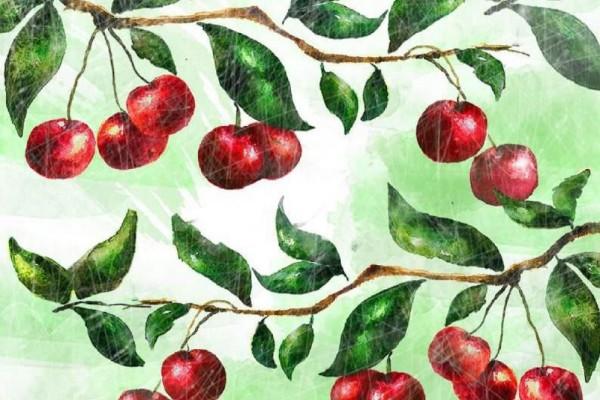 A spasso con la frutta rossa. Trekking storico